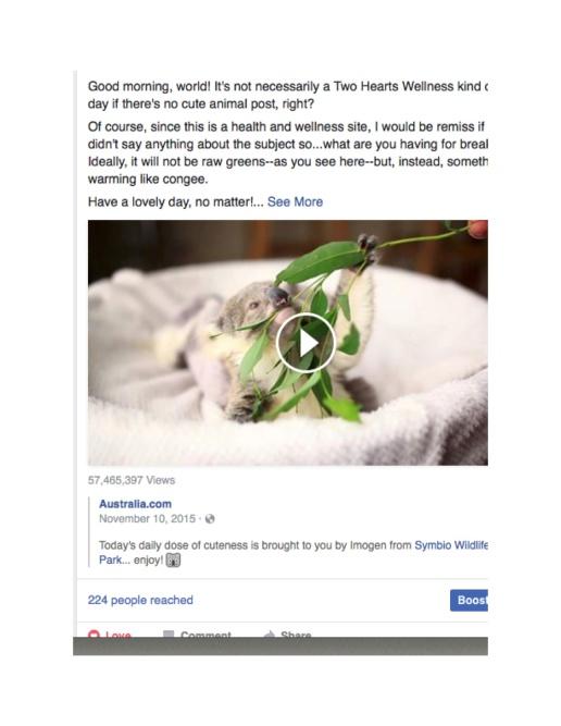 Screen Shot 2016-09-03 Koala copy