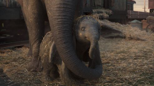 Dumbo and his mama